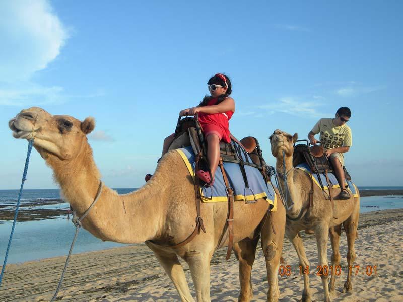 camel_safaris